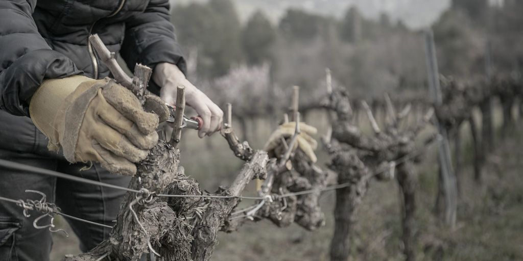 Pruning at vineyards | Reserva de la Tierra